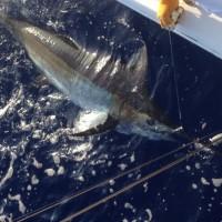 500 pounds fish