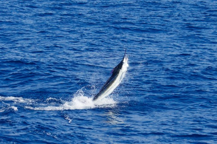 kona hawaii fishing charters