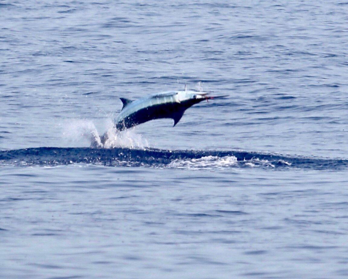 Kona fishing report