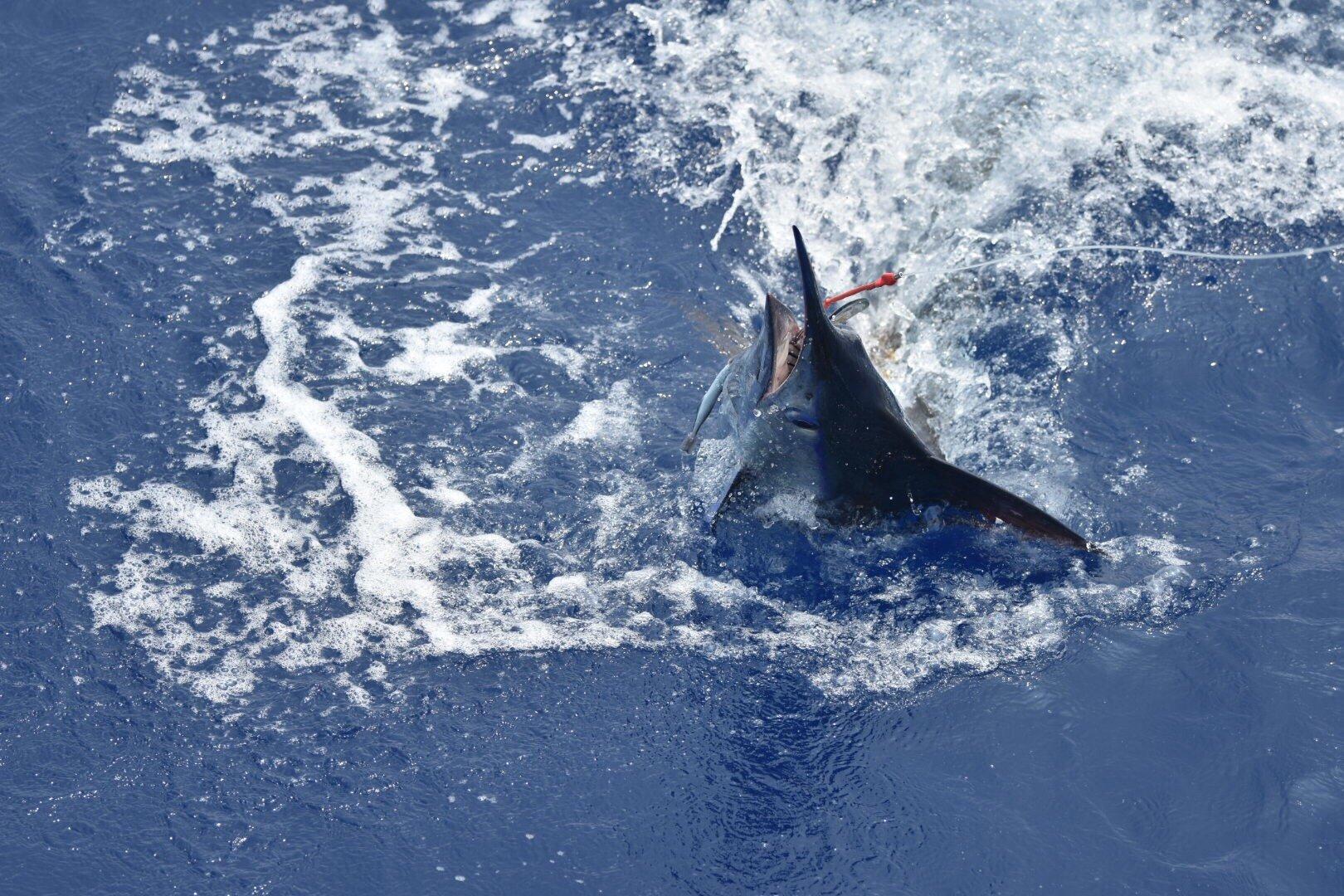 Charter fishing Hawaii