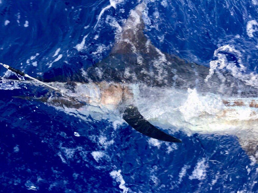 Kona Hawaii marlin fishing
