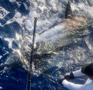 blue marlin kona fishing
