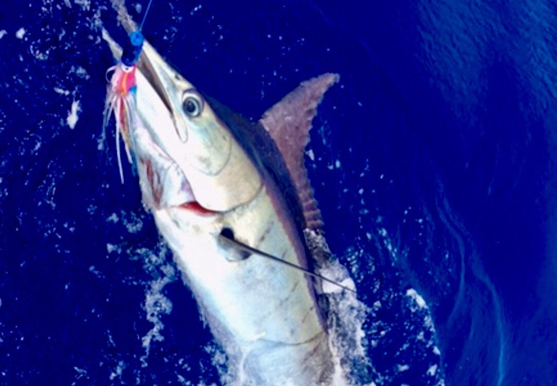 Blue marlin fishing Kona Hawaii