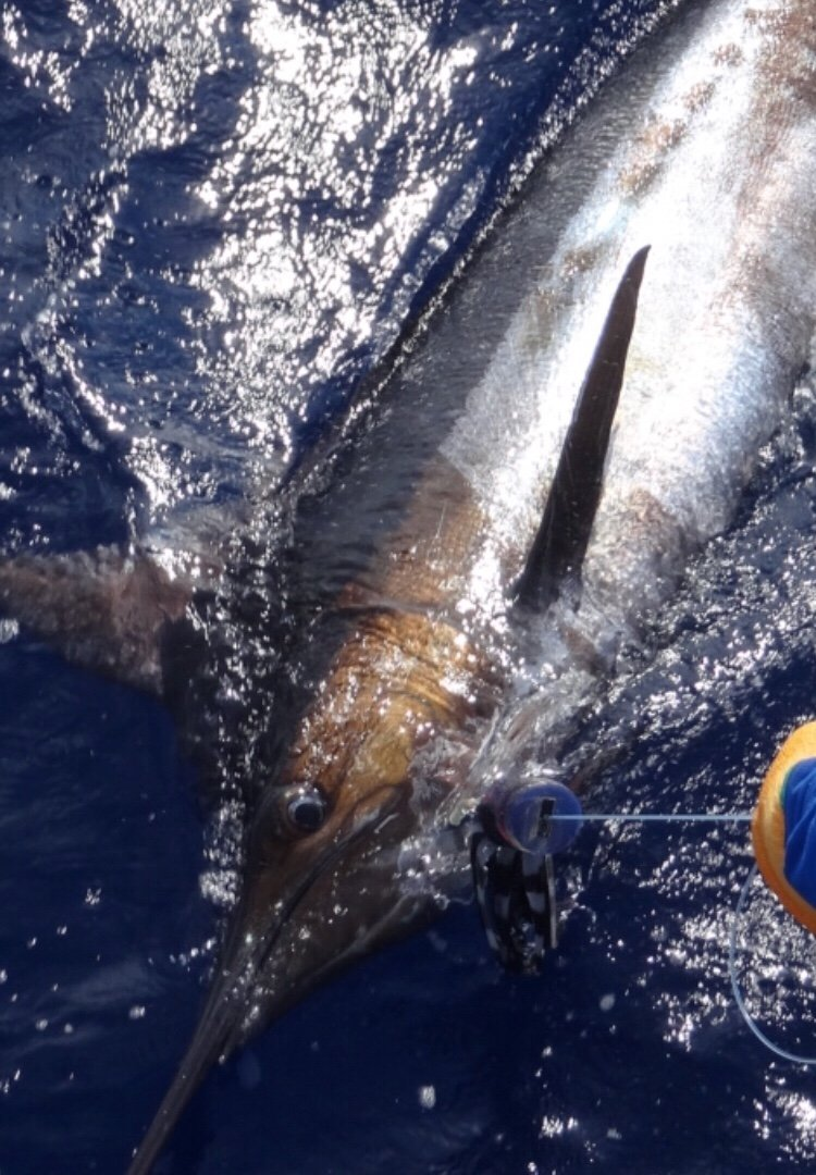 Kona blue marlin fishing