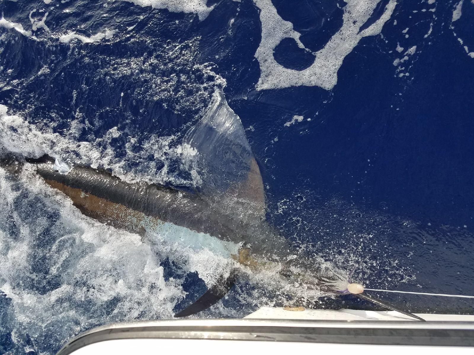 Charter fishing Kona