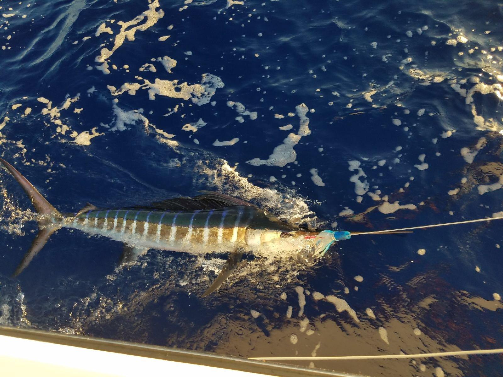 Deep sea fishing in Kona