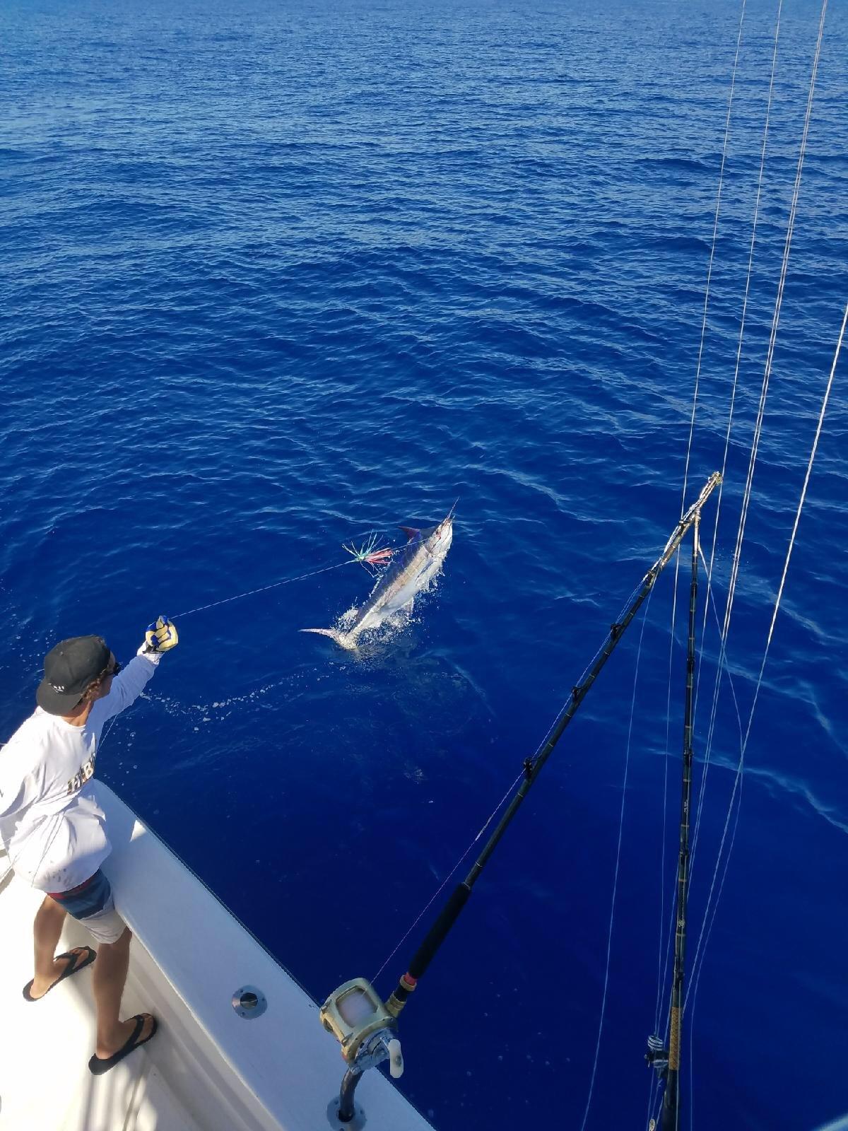 Blue marlin deep sea fishing Kona