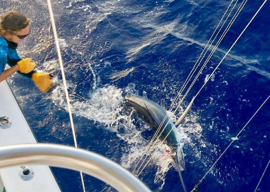 Hawai'i marlin fishing