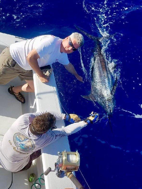 Blue marlin fishing report Kona