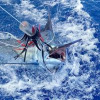 marlin fishing in kona hawaii