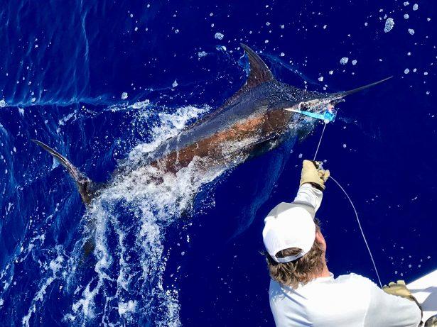 Blue Marlin deep sea fishing in kona Hawaii picture