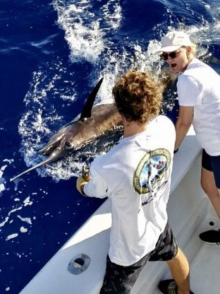 Blue Marlin deep sea fishing