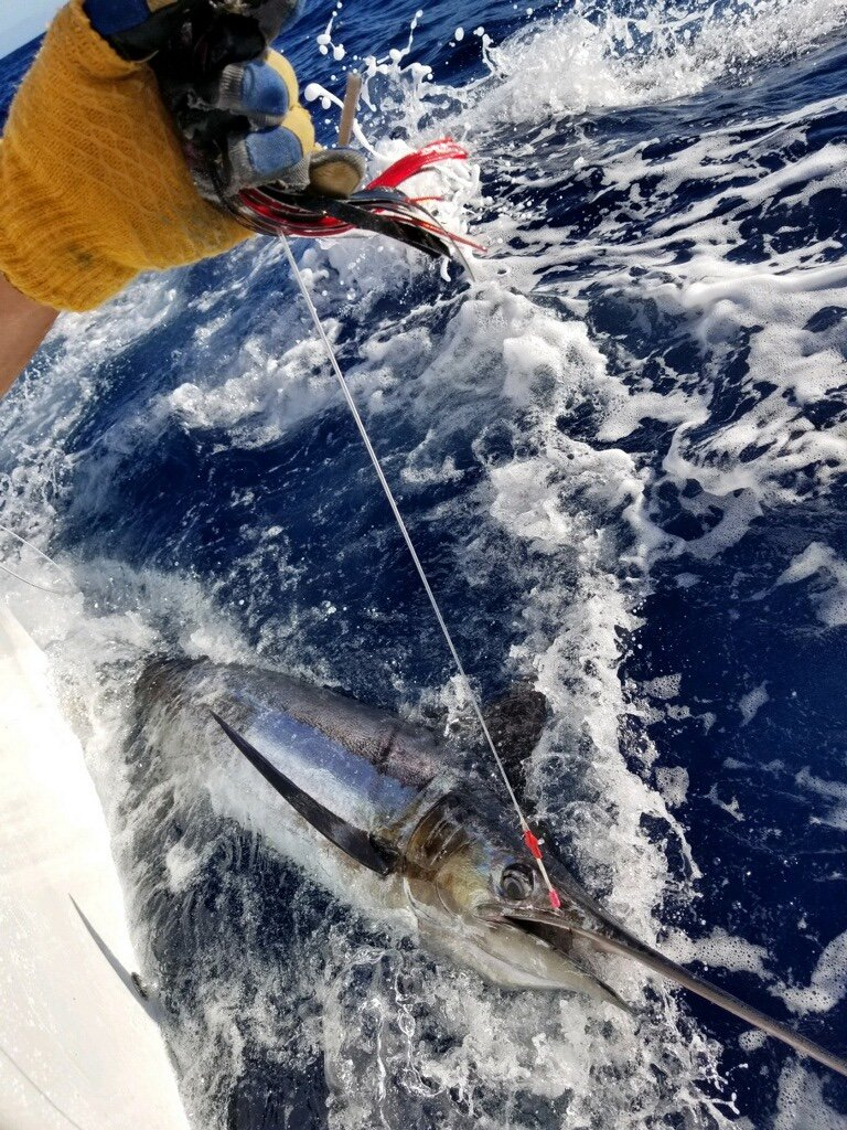 Blue marlin beside the boat!
