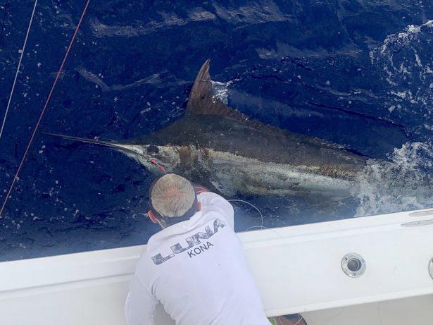Blue Marlin Released