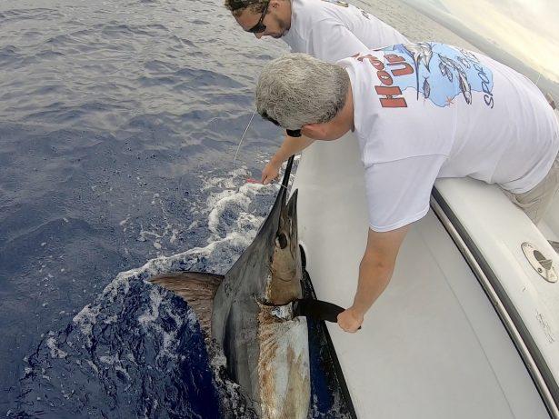 Fishing blue marlin