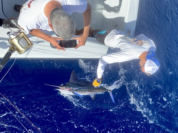 Stripe Marlin