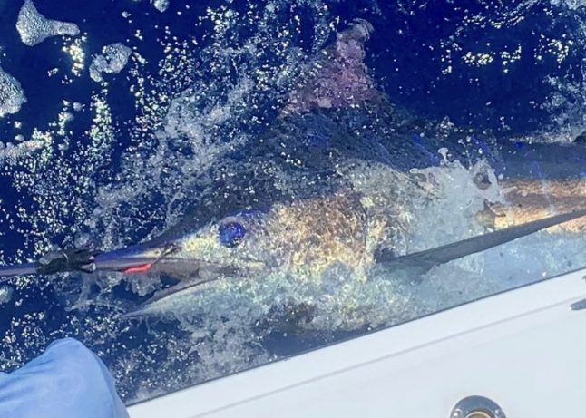 Kona charter fishing for blue marlin.