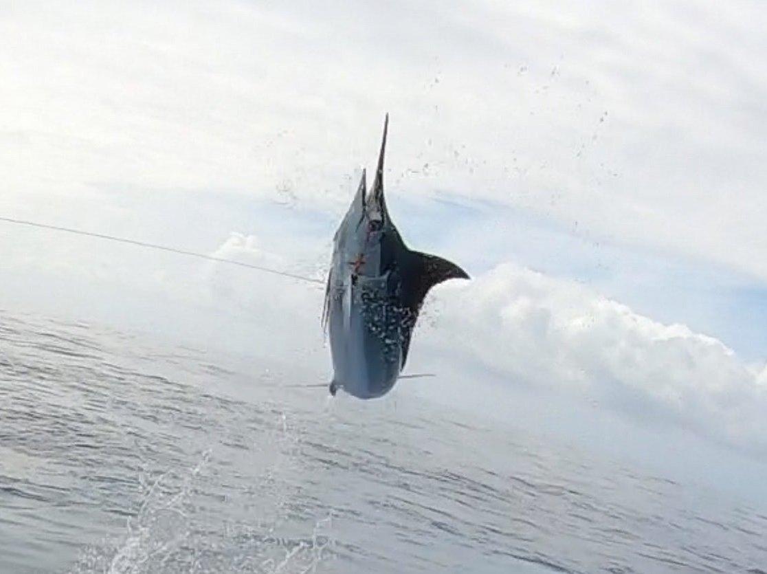 Blue marlin kona